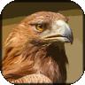 野鹰模拟器